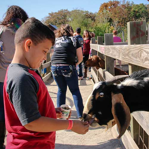 Kids love to visit Appleberry Orchard play area and petting farm while mom and dad love the fresh, homemade pies and breads in the farm market, at Appleberry Orchard in Donnellson, Iowa.
