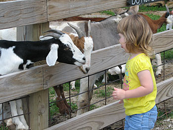 Educational school tours include a visit to the petting farm, the play area, and a wagon ride through the apple orchard and the berry fields, at Appleberry Farm in Donnellson, Iowa.