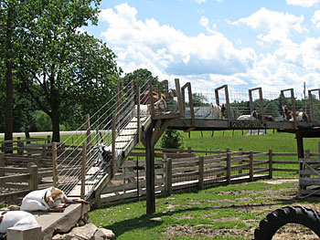 The petting farm and play area are available to the students on educational field trips to Appleberry Orchard in Donnellson, Iowa.